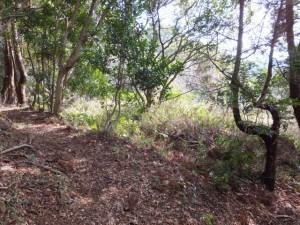 音無山園地から太江寺への下り(途中から左へ)