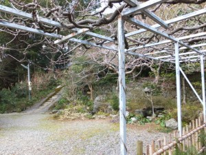 太江寺の藤棚(二見町江)