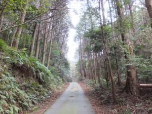松下社から粟皇子神社へ(林道の峠)