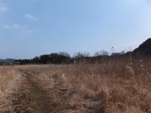 松下社から粟皇子神社へ(湿地帯)