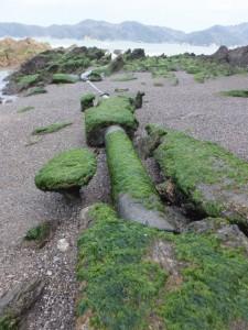 粟皇子神社の裏手にある浜