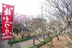 梅まつり(新開臥龍梅公園)