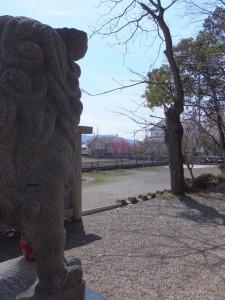 箕曲神社の寒緋桜(伊勢市小木町)