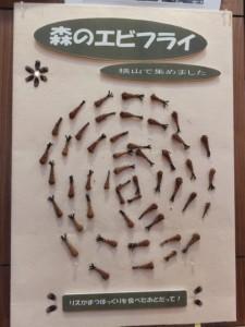 「森のエビフライ」の展示(横山ビジターセンター)