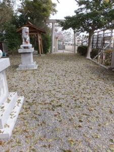 箕曲神社、春の落葉(伊勢市小木町)