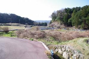 伐採された坂本棚田下部のミツマタ(亀山市安坂山町)