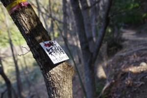 矢原川本谷 三角点の案内板(坂本棚田から「ミツマタの森」への途中)