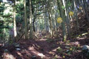 ミツマタの森(坂本棚田から野登寺への途中)