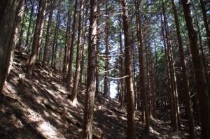 「ミツマタの森」から野登寺へ