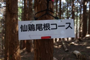 仙鶏尾根コースの案内板(「ミツマタの森」から野登寺へ)