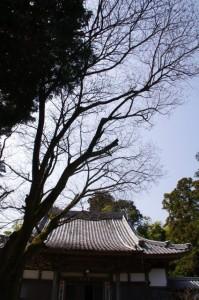鶏足山 野登寺(下寺)