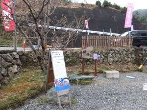 横輪公民館前の横輪桜(伊勢市横輪町)