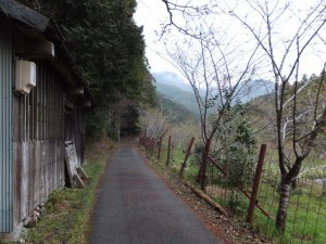 飛滝への途中の桜(伊勢市横輪町)