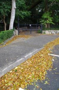 駐車場の落ち葉(伊雑宮)