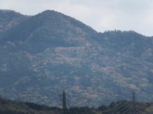 伊勢志摩スカイライン周辺の山桜?