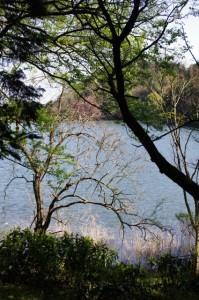 左手に望む新池(「口(国)束山登山道」の道標~弘法石)