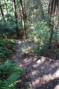 谷コースへの下り(国束山山頂~鳴子山)