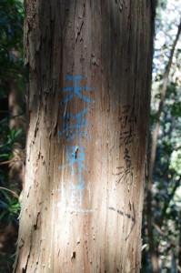 谷コースへの分岐(国束山山頂~鳴子山)