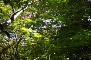 鳴子山への上り(国束山山頂~鳴子山)