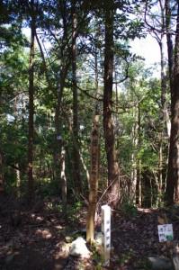 「大赤樫 天然記念物 50メートル」の案内柱(鳴子山山頂)