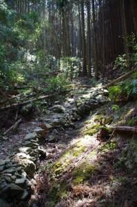 弘法石へ(国束山 谷コース)