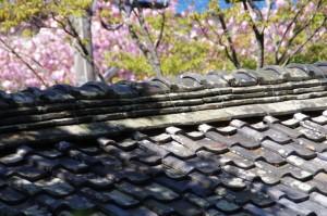 観音堂の屋根と桜(度会郡玉城町原)