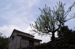 横輪川付近(伊勢市横輪町)