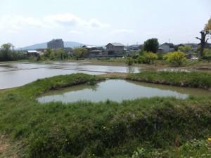 勢田川右岸(北新橋~川の駅 二軒茶屋)