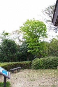 展望台から太江寺へ下る山道(音無山園地)