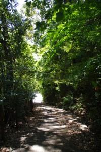 松尾観音寺前の下り坂
