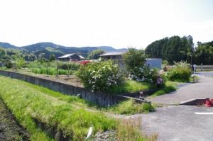 脇道(876)