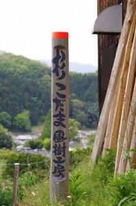 杉こだま風樹工房((4948)から岡寺(5628)へ)
