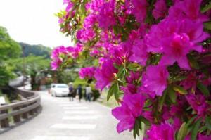 岡寺からの坂道