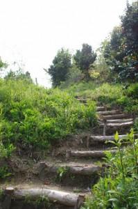 炭焼き小屋横の山道(甘樫丘)