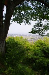 炭焼き小屋横の山道から頂上へ(甘樫丘)