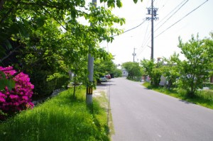 桜並木、(8736)の手前