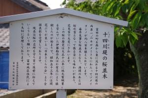 十四川堤の桜並木の説明板