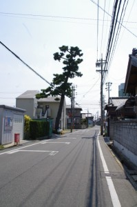 かわらずの松(2617)