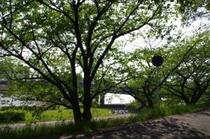 三ツ谷の一里塚跡(4888)付近