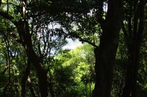 池の浦側の風景(大日和山付近)