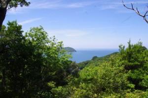 池の浦湾展望台からの風景
