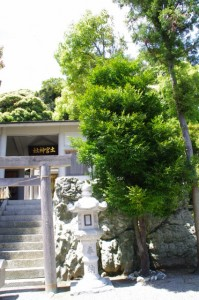 ナギの木(土宮神社)