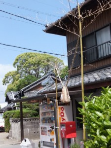宇須乃野神社の社叢を遠望