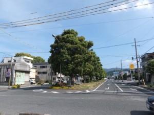 JR参宮線 山田上口駅前のクスノキ並木