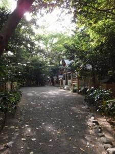 河原淵神社前から望む船江上社の境内