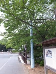 昭和の電柱(外宮 北御門付近)