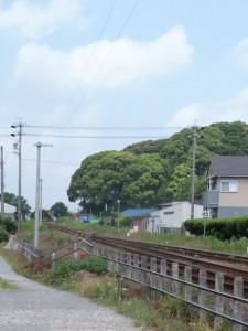 JR参宮線 田丸踏切付近から望む田丸城址