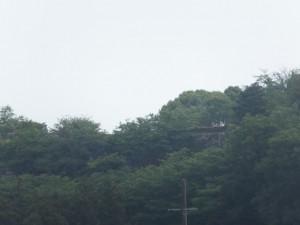 遠望する田丸城址