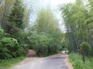 「女鬼峠 登り口まで500m」の道標付近