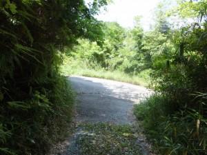 「熊野古道 女鬼峠 0.8km」の道標付近